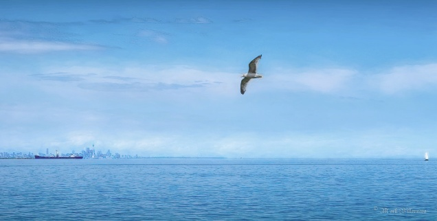 Bird over Lake Ontario